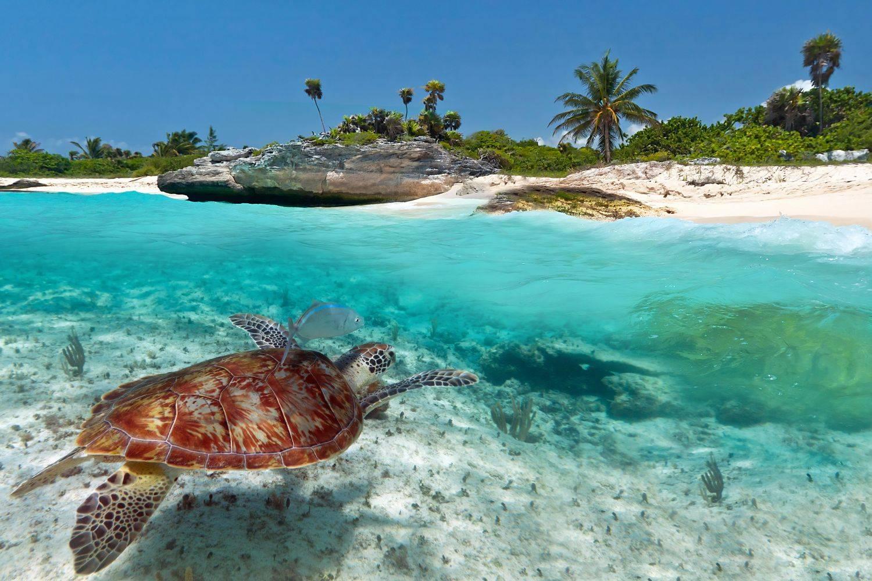 Новая опасность- красноухие черепахи заполонили кипр