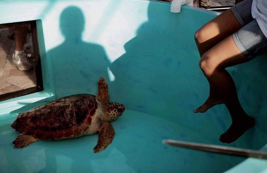 Болезни красноухой черепахи