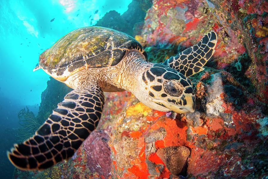 Черепахи начали питаться пластиком. что с этим делать? - hi-news.ru