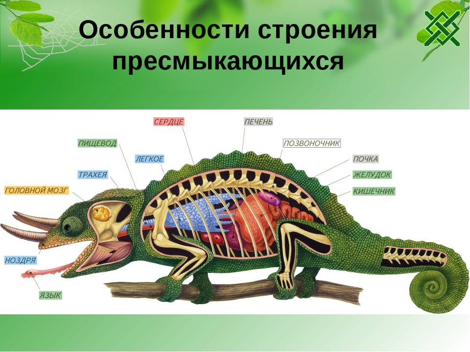 Тестовые задания - урок 17 - тип хордовые - животные - теоретический материал для подготовки к егэ