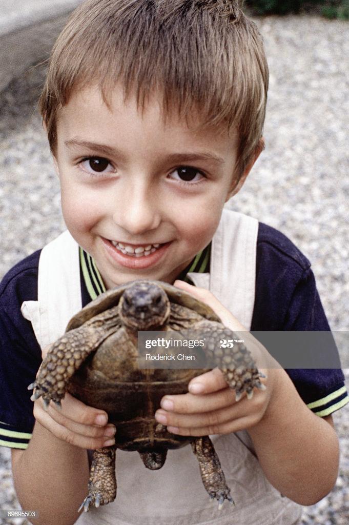 Как приручить черепаху | мои домашние питомцы