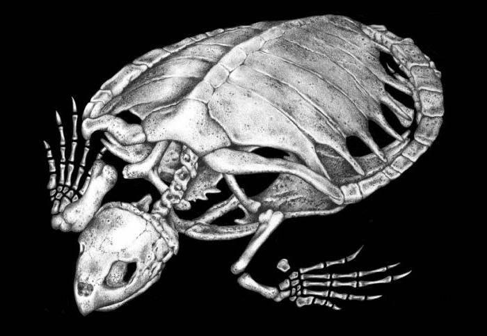 Строение человека. кости головы (череп). строение черепа: отделы скошенная теменная кость