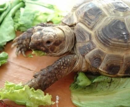 Черепаха ничего не ест