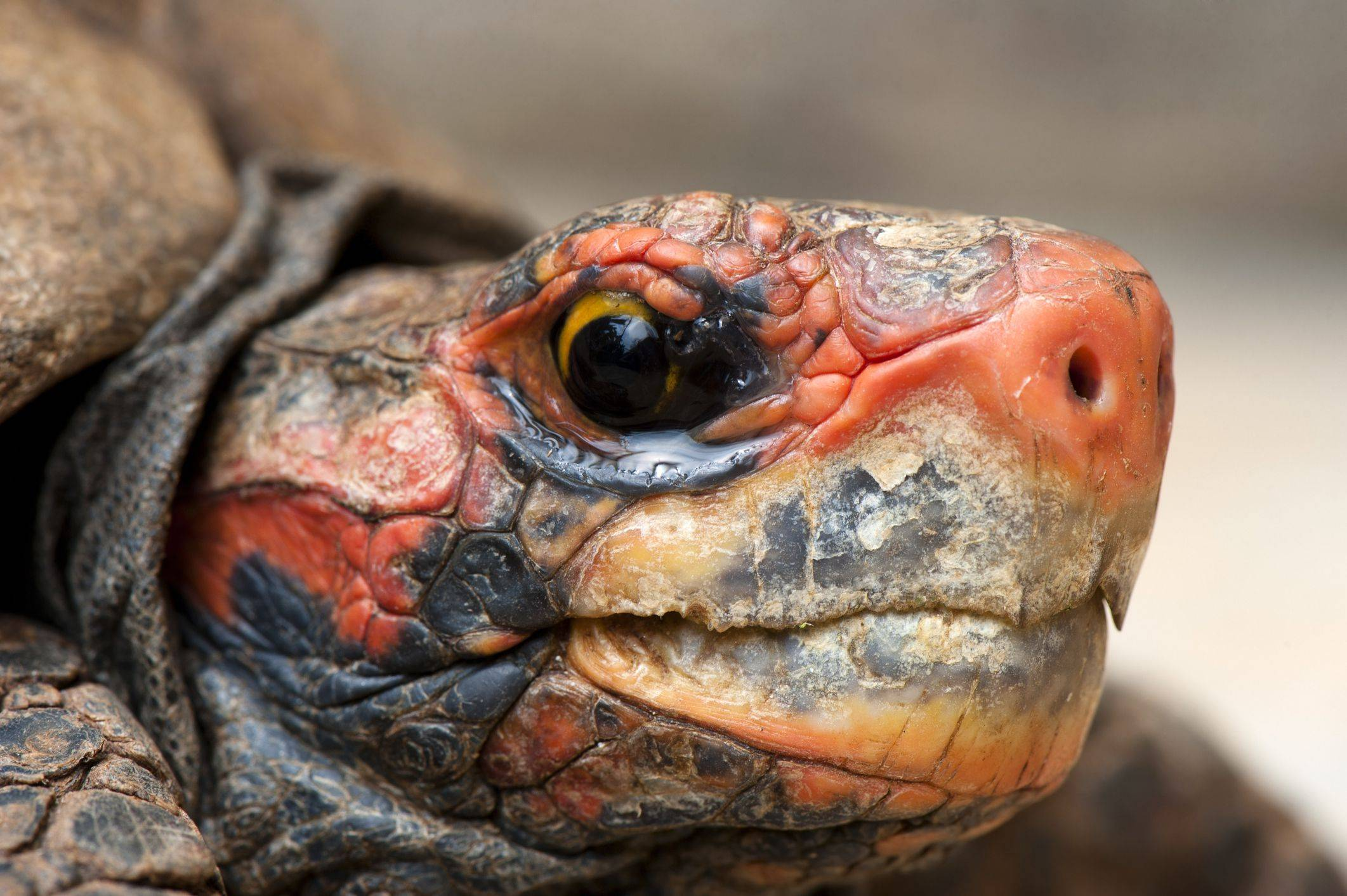 Класс рептилии. отряды черепахи, крокодилы