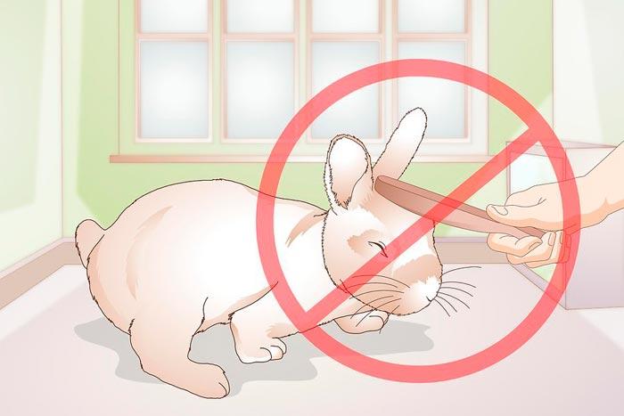 Кусаются ли декоративные кролики и почему