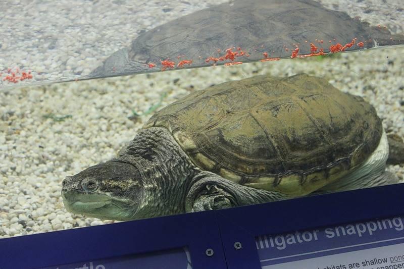 На кипре вылупились сотни черепашек (фото)