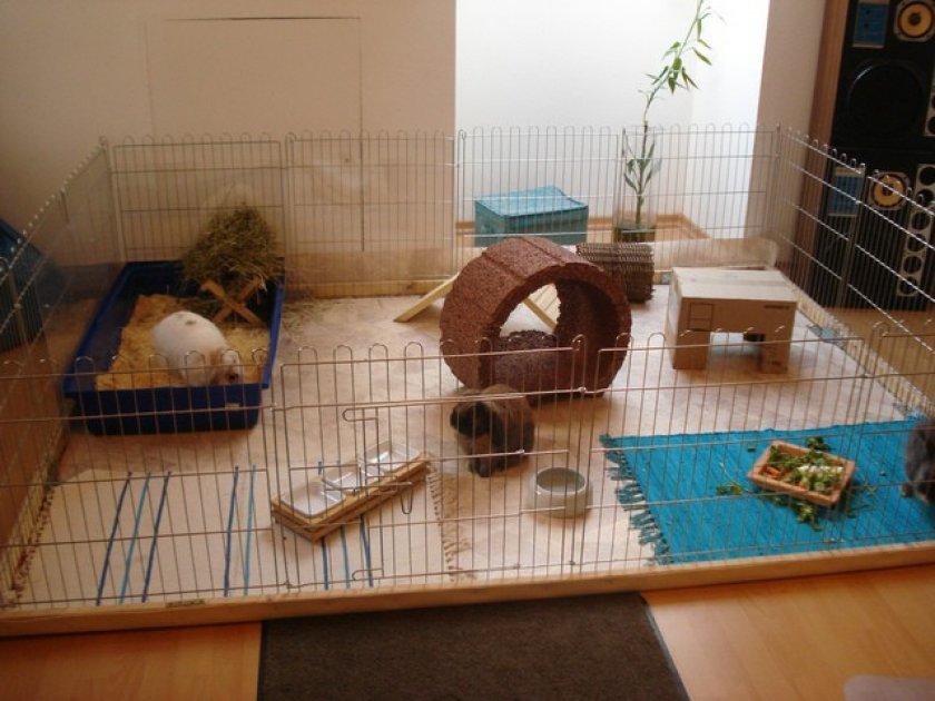 Как сделать вольер для декоративного кролика своими руками