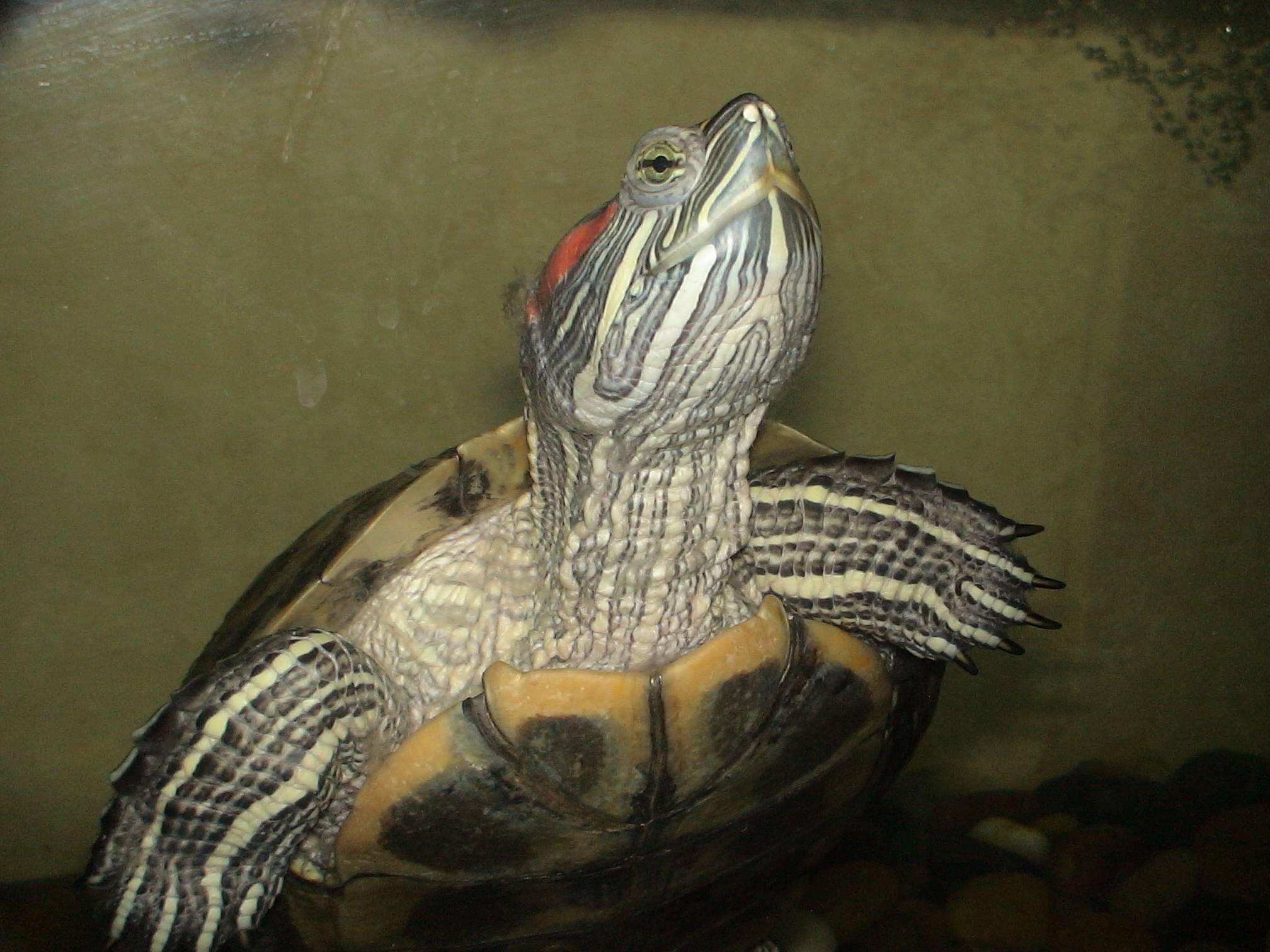 Дикие цветы - черепахи.ру - все о черепахах и для черепах