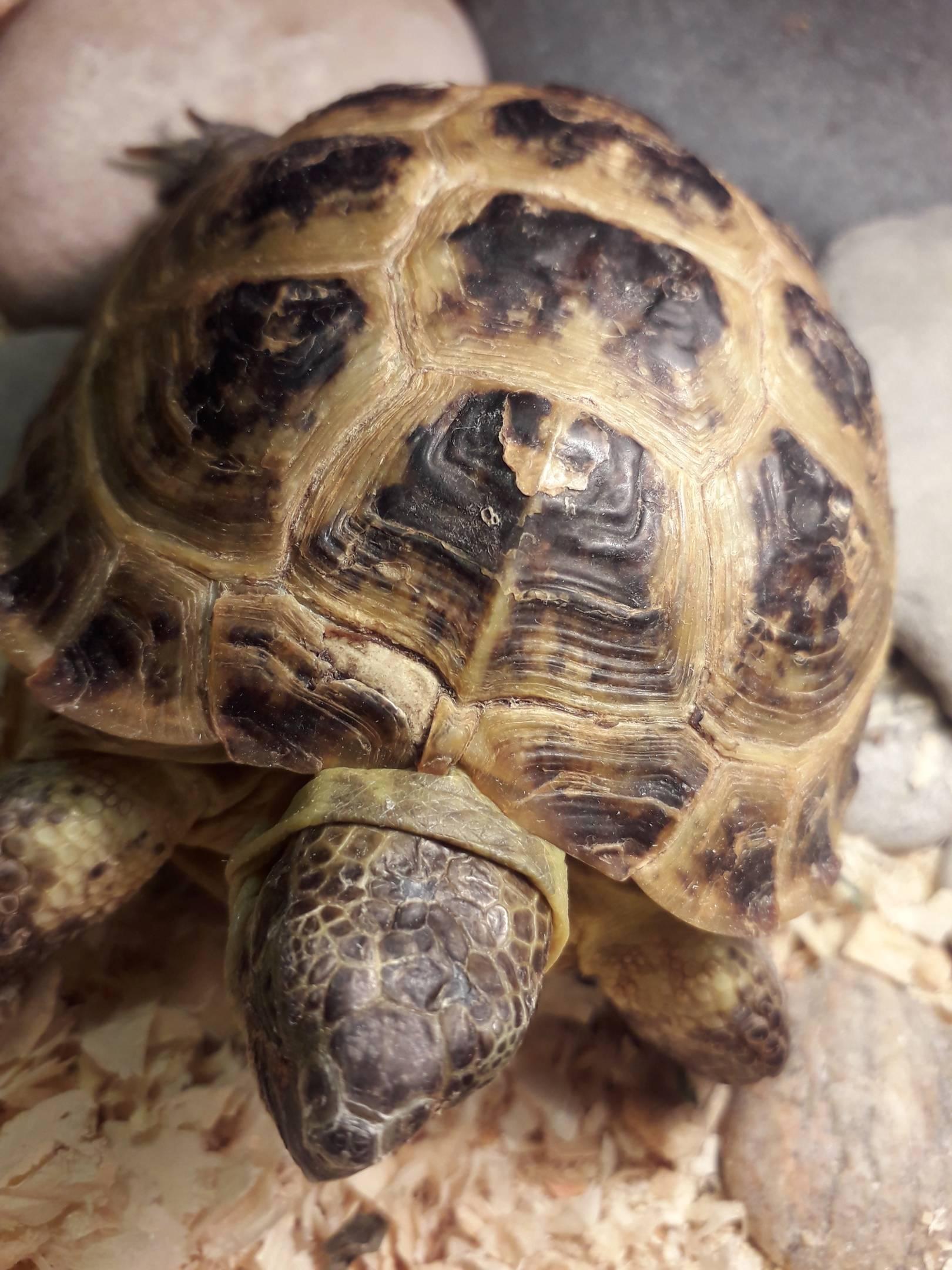 Болезни черепах - симптомы и способы лечения