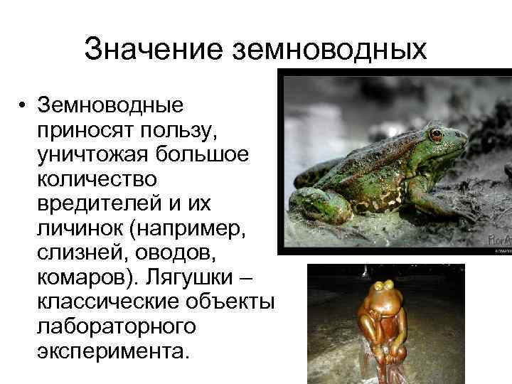 Лягушка в домашних условиях