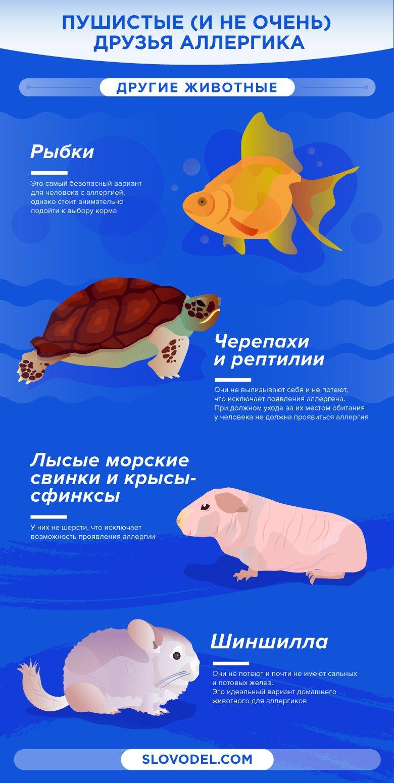 Гипоаллергенные животные