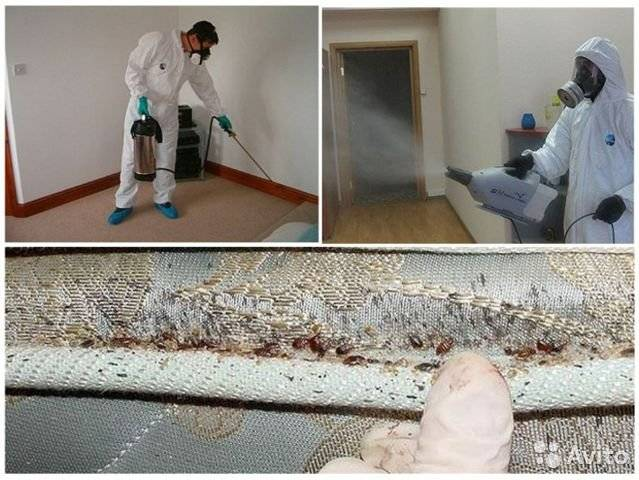 Дезинсекция в москве (уничтожение насекомых)