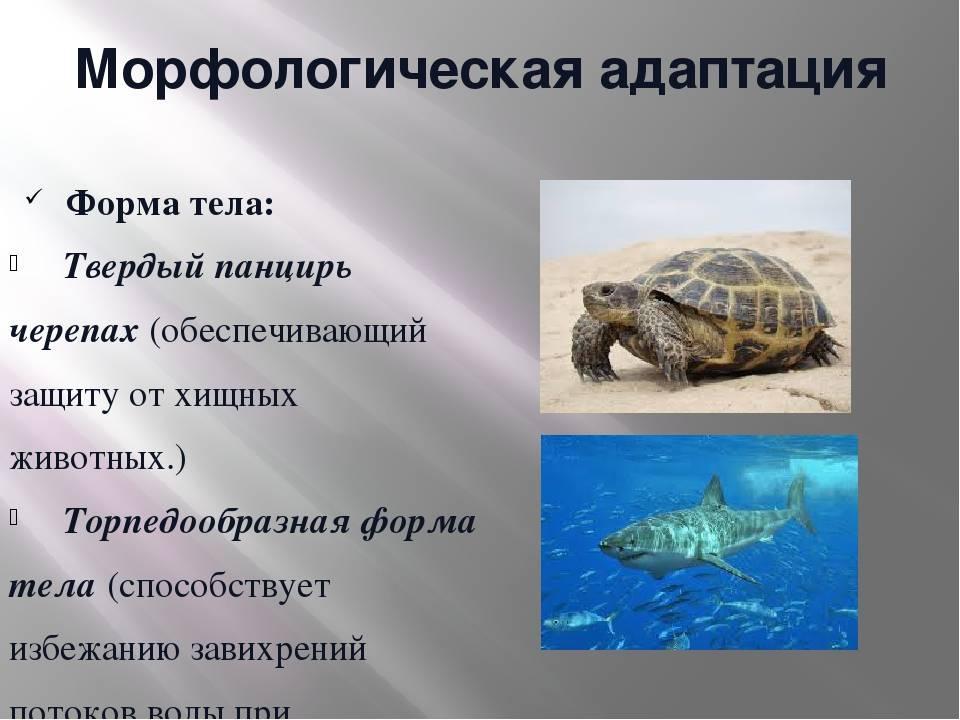 Морфологические адаптации - адаптаций животных к факторам среды