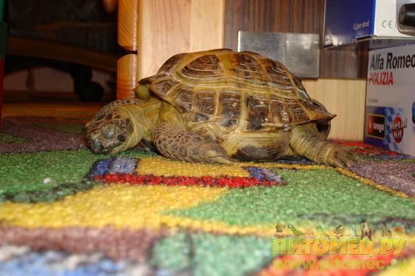 Как понять что черепаха впала в спячку?