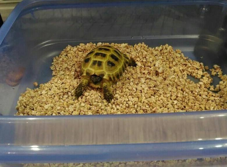 Черепаха пищит и открывает рот: почему и что делать