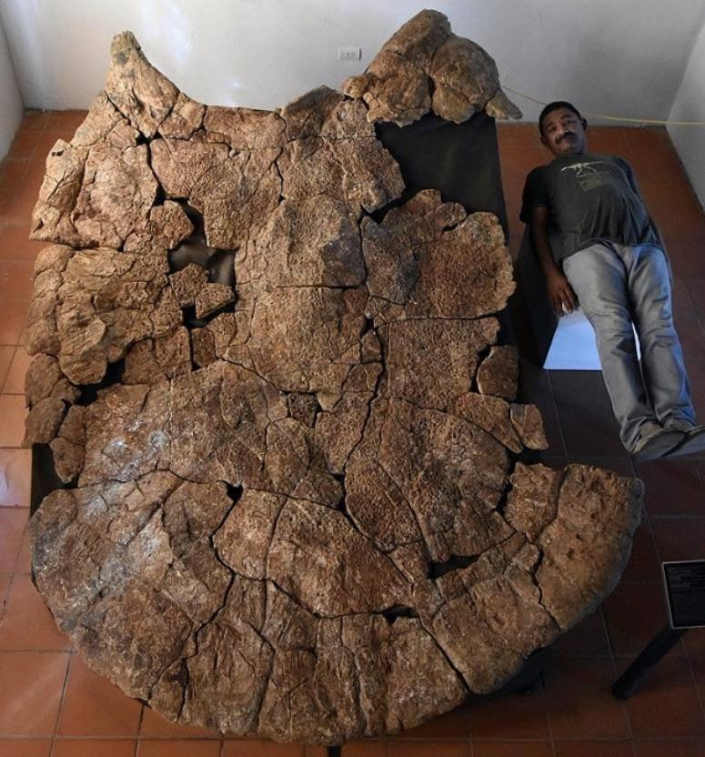 Огромная доисторическая черепаха с рогатым панцирем