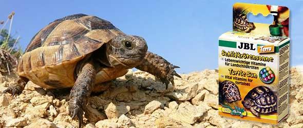 Витамины для черепахи сухопутной и красноухой