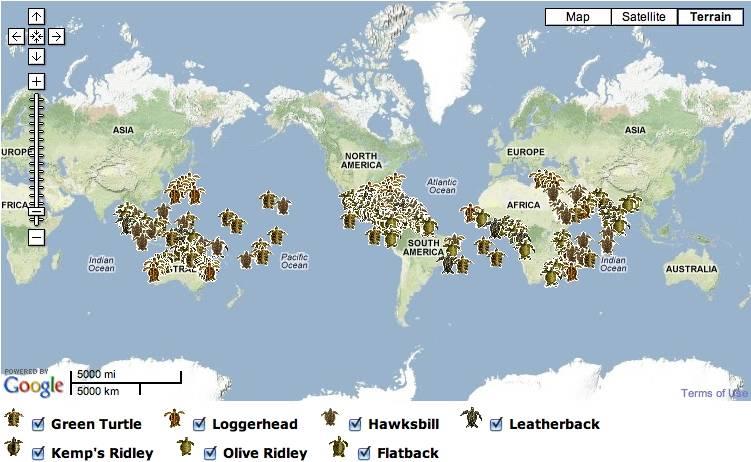 Фестиваль выпуска на волю черепах, пхукет, таиланд. отели рядом на карте, фото, видео, как добраться — туристер.ру