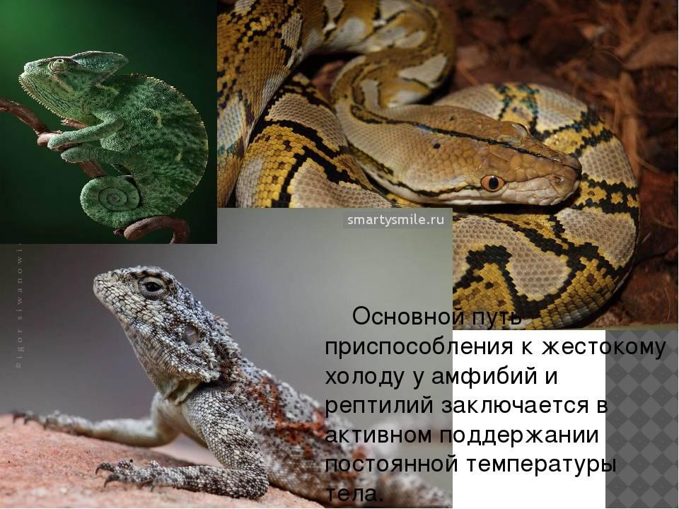 Земноводные: классификация, размножение, развитие, поведение. зимовка земноводных
