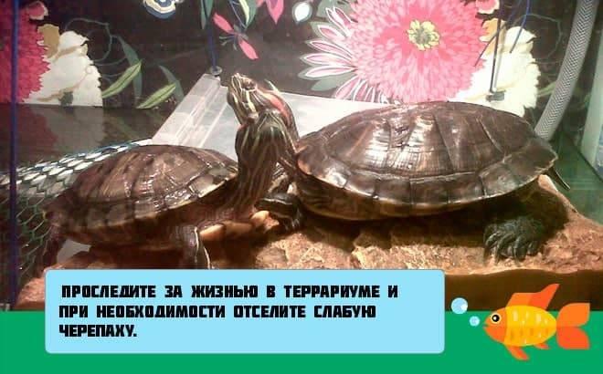 Черепаха ничего не ест, основные причины и последствия