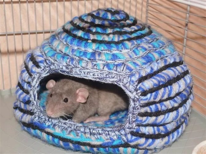 Домик для шиншиллы: каким должно быть место для отдыха питомца