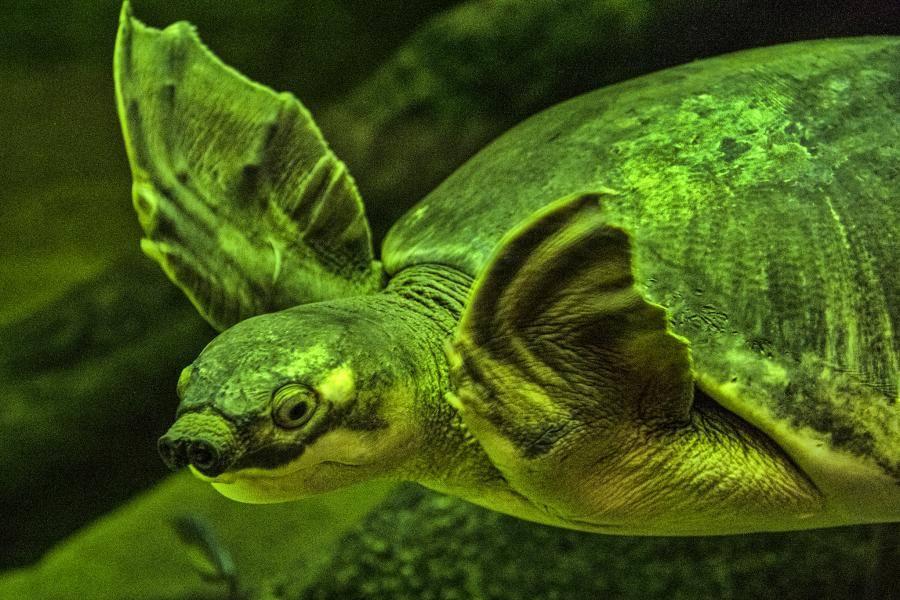 Самая красивая черепаха в мире. самые необычные черепахи топ 10 самых красивых черепах