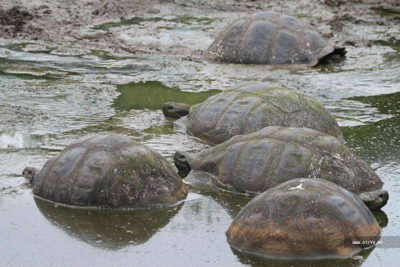 Где посмотреть на черепах в россии (южный и северо-кавказский фо)?