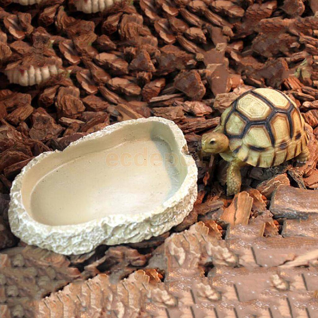 Как выбрать и использовать ультрафиолетовую лампу для красноухих или сухопутных черепах