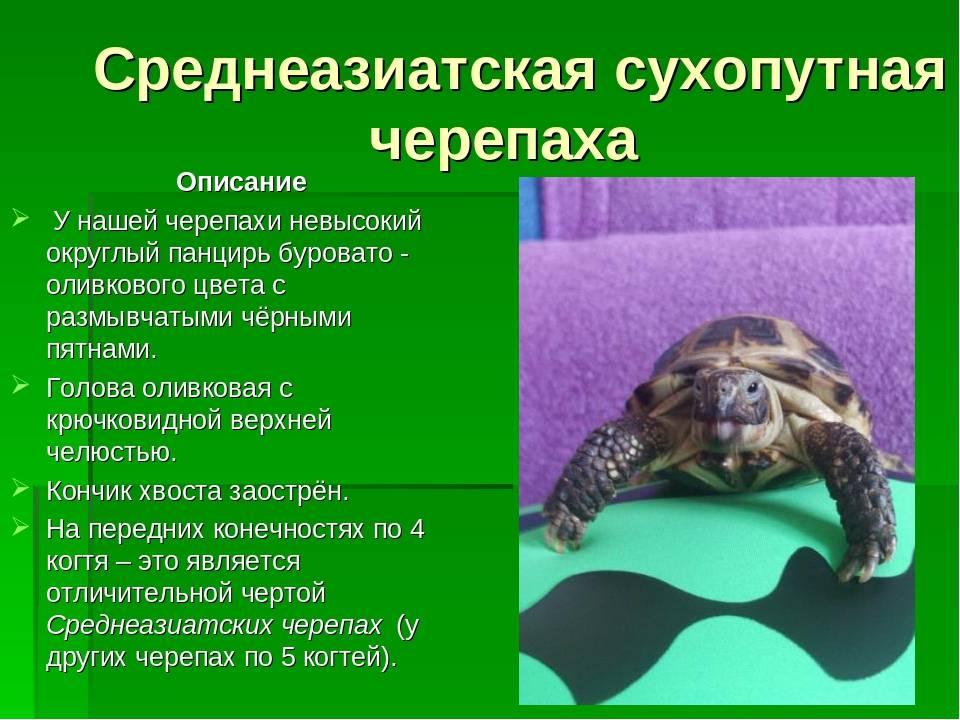 Распространенные заболевания красноухих черепах и их лечение