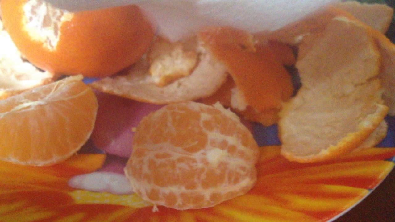 Давать ли хомякам мандарины и можно ли другие цитрусовые?