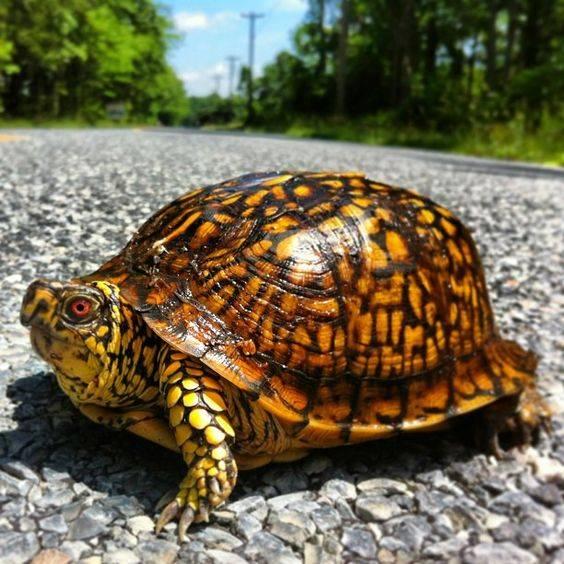 Сонник ядовитая черепаха. к чему снится ядовитая черепаха видеть во сне - сонник дома солнца. страница 9