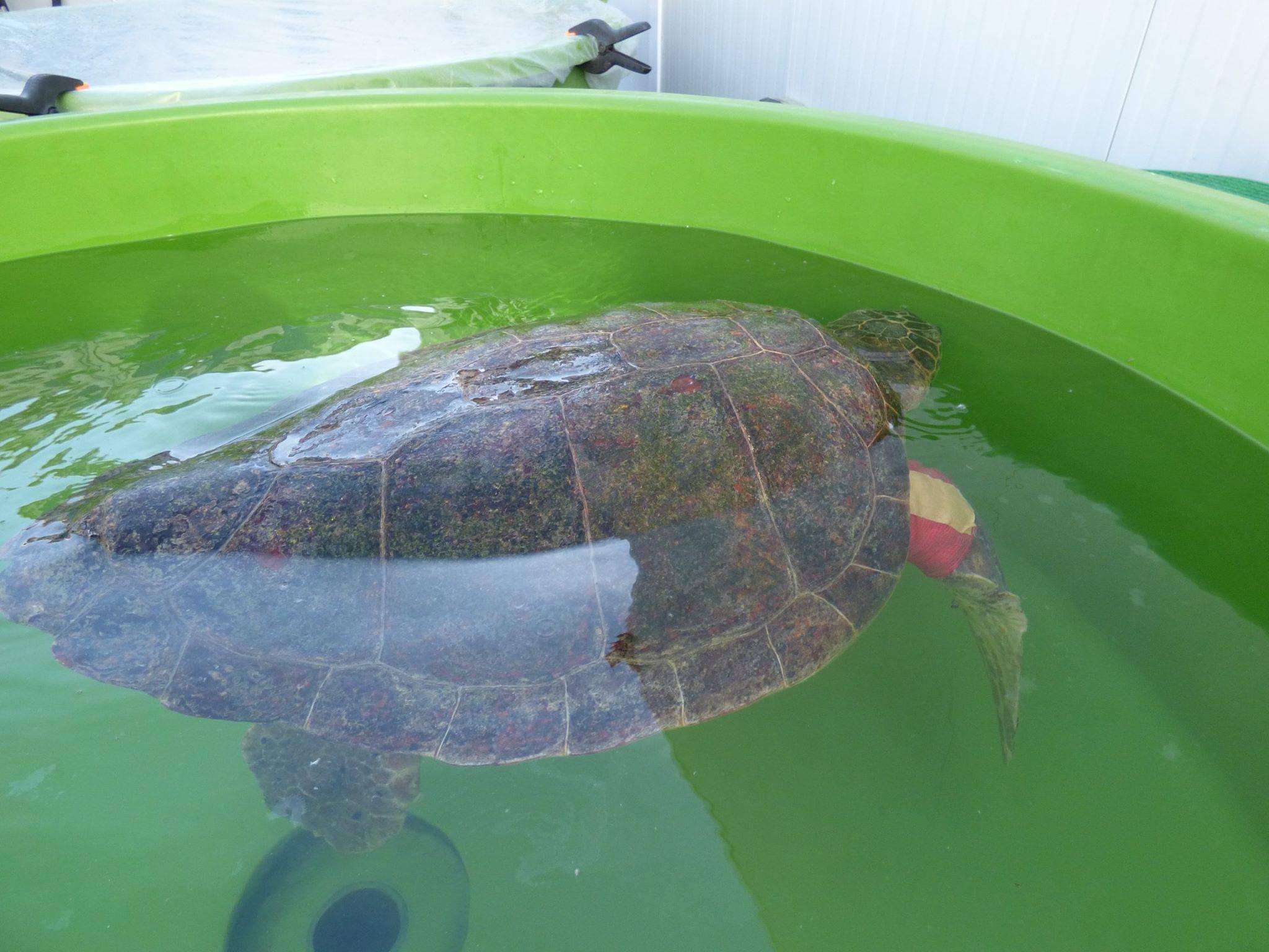Содержание - черепахи.ру - все о черепахах и для черепах