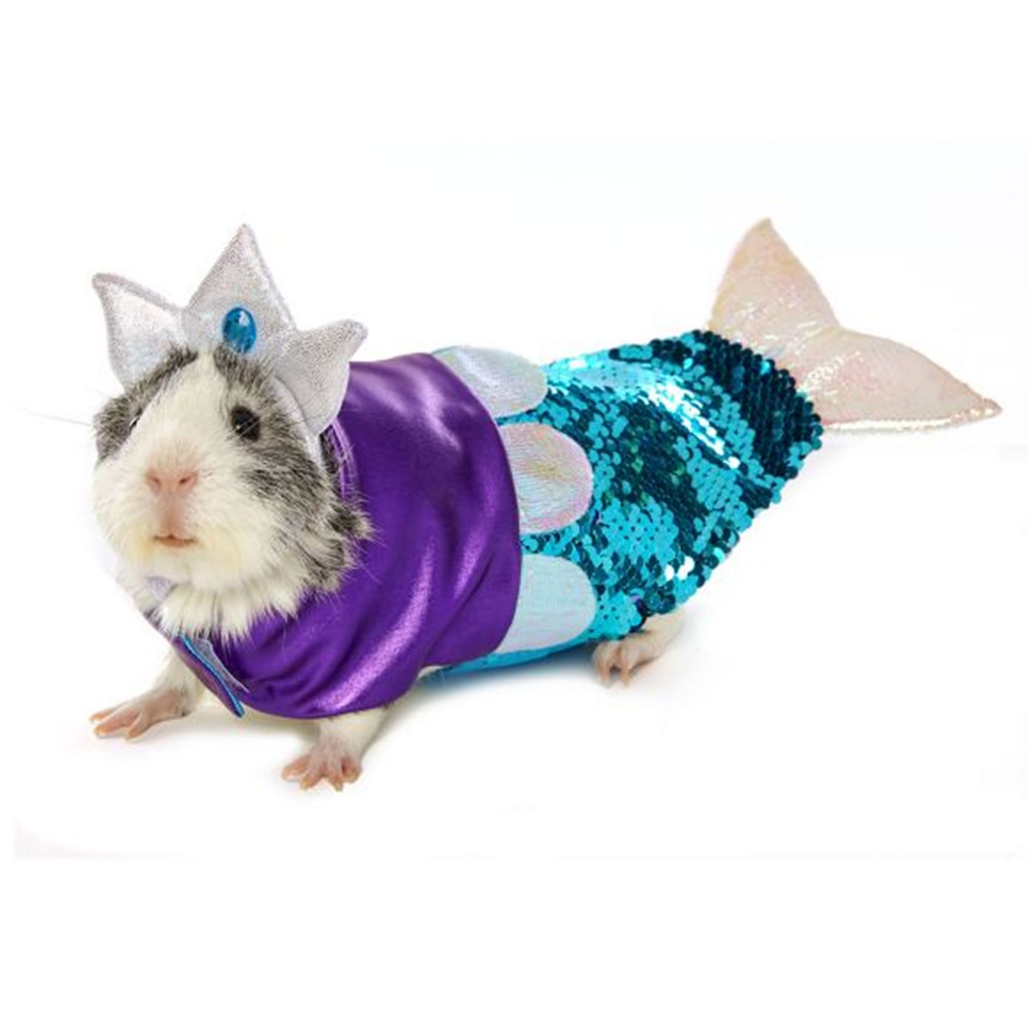 Как сшить одежду для морских свинок своими руками?