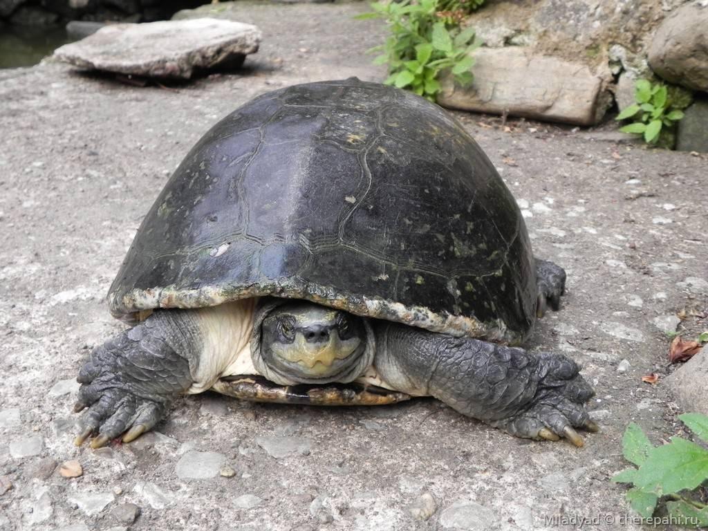 Смотритель черепах одай - npc - world of warcraft