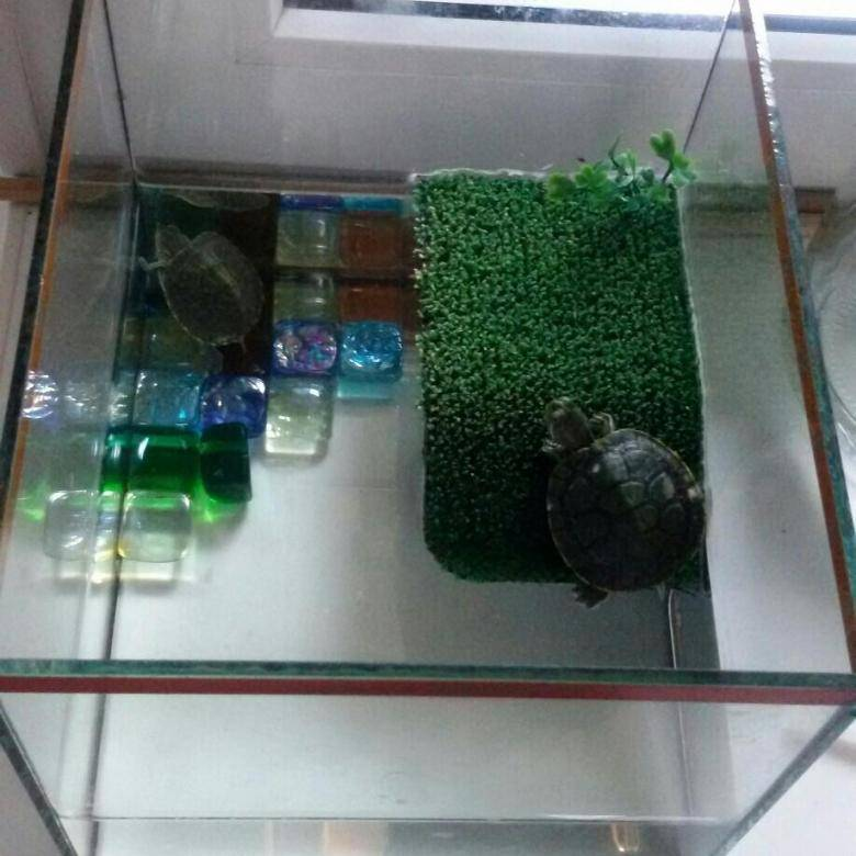 Аквариумные черепахи: разновидности, уход и размножение