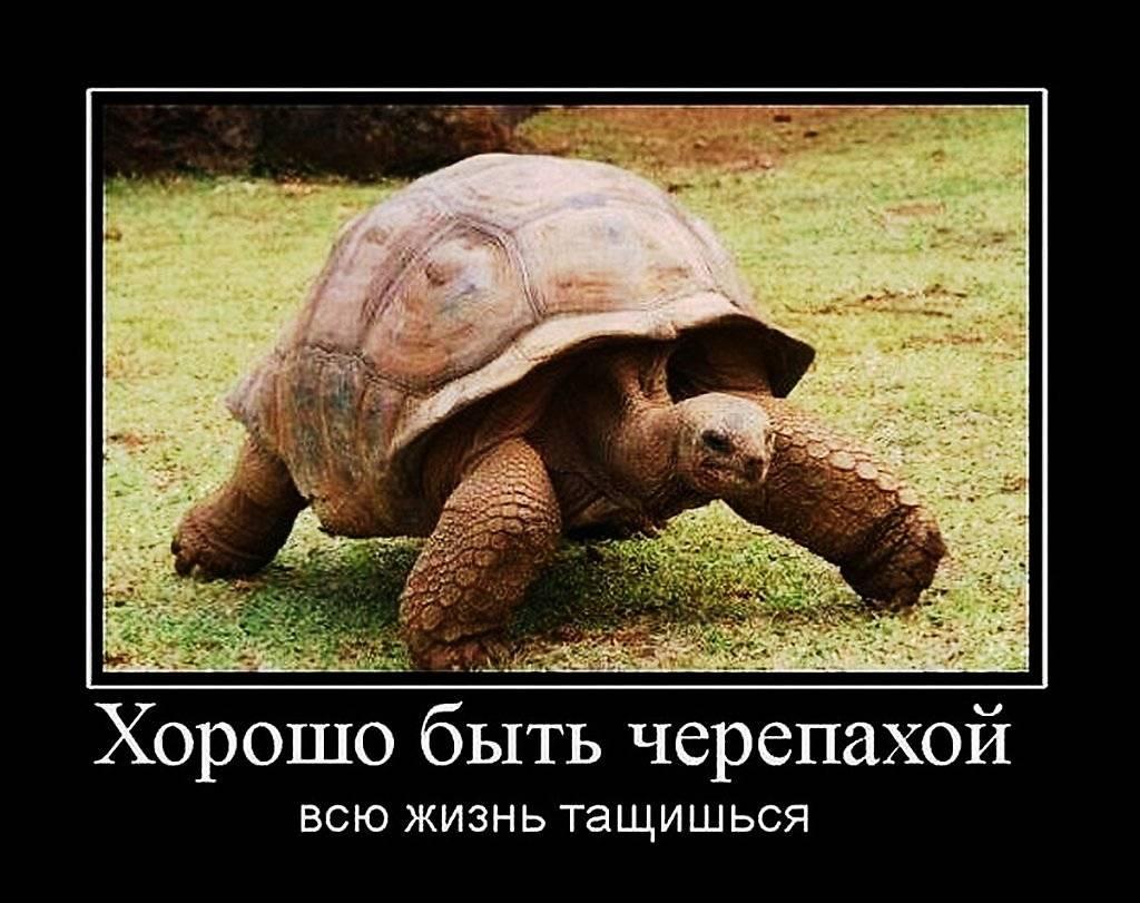 Анекдоты про черепаху