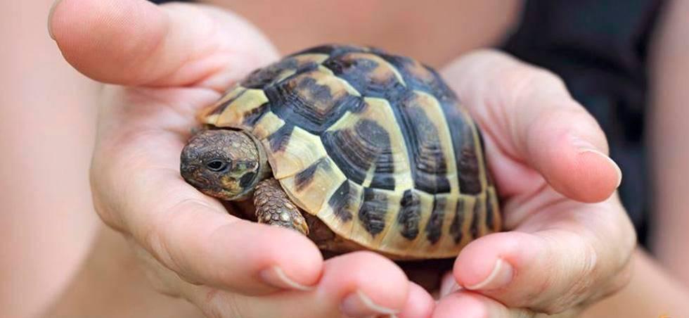 Может ли быть аллергия на черепаху
