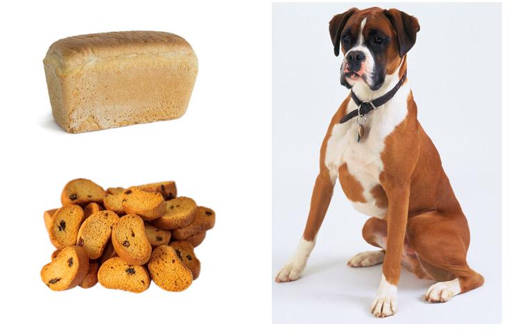 Едят ли хомяки хлеб?