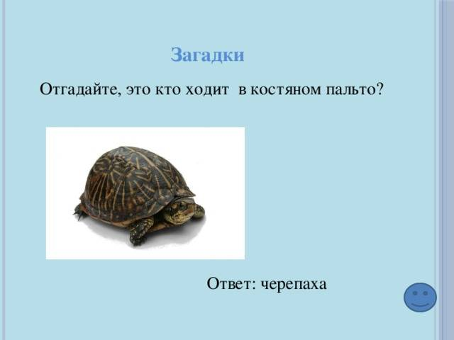 Задача о трёх черепахах