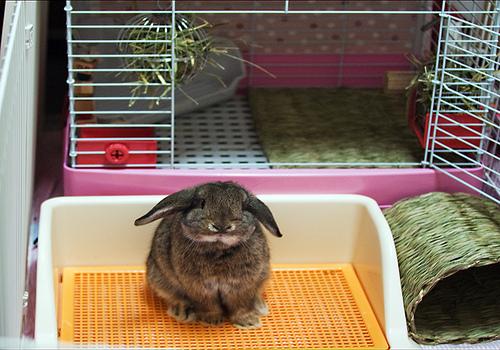 Стоит ли заводить декоративного кролика и какого: отзывы и мнения