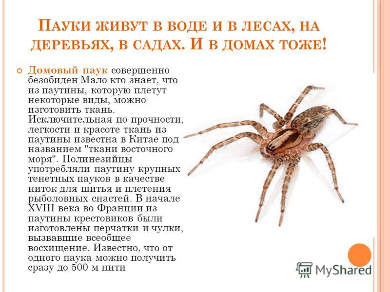 Преимущества и недостатки содержания пауков в домашних условиях