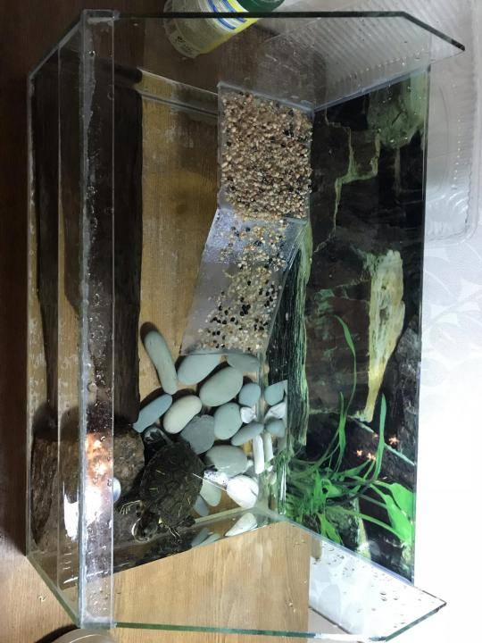 Соседи черепахи по акватеррариуму