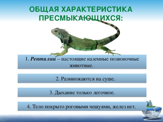 Гипо и гиперавитаминозы у рептилий