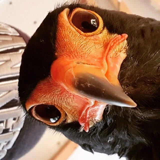 Как определить, что попугай сломал лапку?