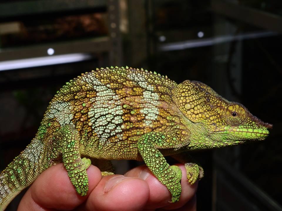 Рептилии и амфибии archives - энциклопедия животных