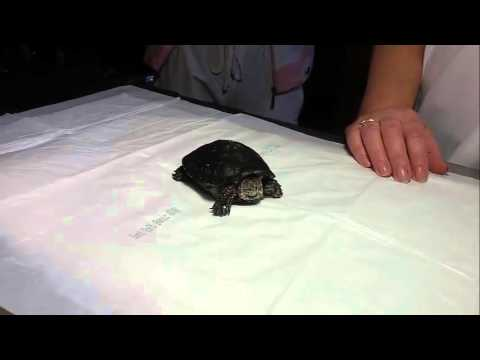 Читать онлайн черепахи страница 29