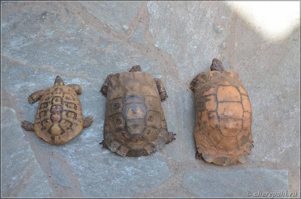 Черепахи и закинф – взаимное притяжение
