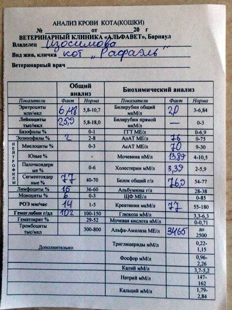 Биохимический анализ крови черепахи