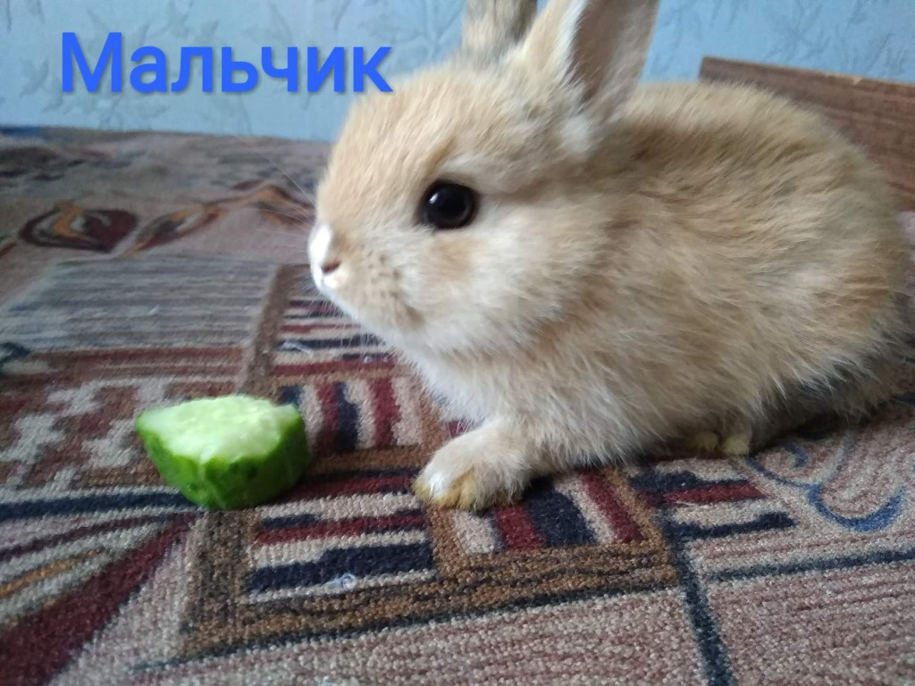 Воняют ли кролики декоративные в квартире