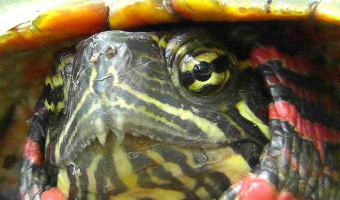 Бывает ли аллергия на черепах?